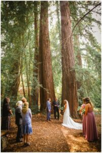 small wedding in the california redwoods